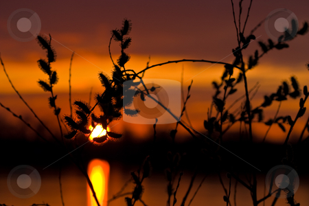 Sunset stock photo, Nature series: spring sunset on a river by Gennady Kravetsky