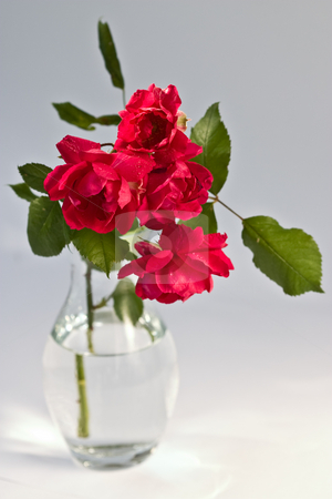 Rose stock photo, Bouquet of red rose on the vase by Gennady Kravetsky