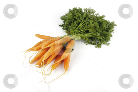 Bunch of Carrots stock photo, Fresh young bunch of carrots with green leafy stems on a reflective white background by Keith Wilson