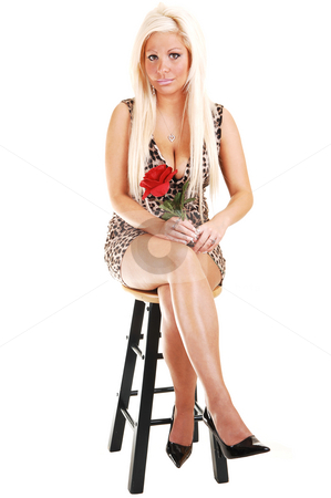 Pretty girl in brown dress. stock photo, Young, lovely girl in a brown dress with long blond hair, looking  in the camera,  in high heels and red rose, sitting on a chair, in the studio for white background. by Horst Petzold