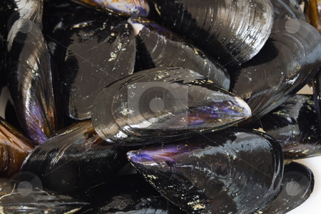 Fresh mussels closeup stock photo, Closeup of fresh mussels isolated in a white plate by ANTONIO SCARPI