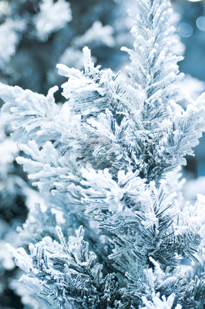 The branch of a fur-tree covered with hoarfrost stock photo, The branch of a fur-tree covered with hoarfrost by Andrey Ivanov