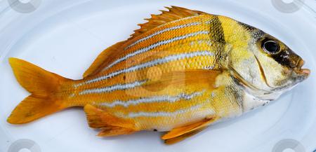 Gold fresh fish stock photo, Gold fresh fish on a white dish by Nataliya Taratunina