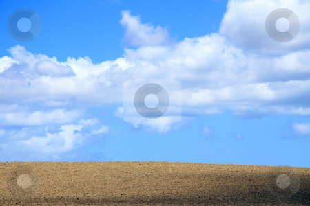 Sugarcane field after harvest stock photo, Sugar cane field after harvest with a vivid blue cloudy sky backgroud. by Gowtum Bachoo