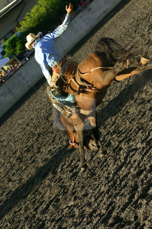 Bucking Bronco stock photo, A rider on a wild adrenaline rush, riding a bucking horse at a rodeo by Leah-Anne Thompson