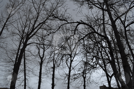 Naked Trees stock photo, Naked Trees leaving out their green leaves standing and waiting by Tony Abdou