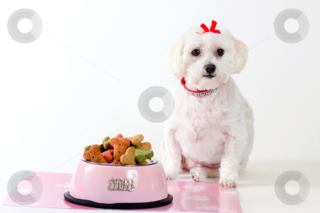 Obedient Dog stock photo, Obedient dog sitting by a bowl of dog food. by Leah-Anne Thompson