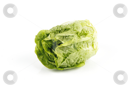 Salad Lettace stock photo, Small single fresh green salad lettace on a reflective white background by Keith Wilson