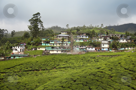 Hill country stock photo, A small town amongst the tea plantations of the western ghats south india by Mike Smith
