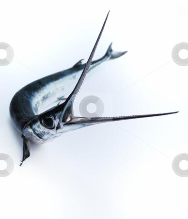Fish saw stock photo, Head with teeth of fish-saw on white background  dangerous, eye, fin, fish-saw, head, mouth, predatory, sharp, silvery, teeth by Nataliya Taratunina