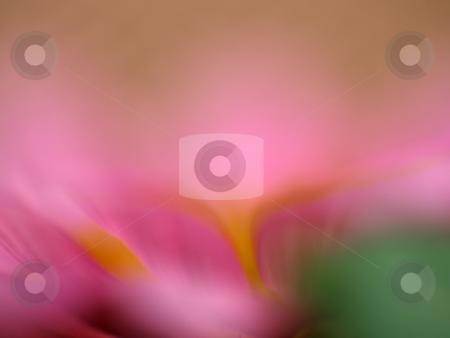 Flower stock photo, Macro of flower by Portokalis