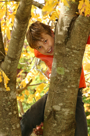 Boy climbing a tree stock photo, A young boy climbs a deciduous tree, its trunk covered with some moss and lichens during Autumn - 400 iso by Leah-Anne Thompson