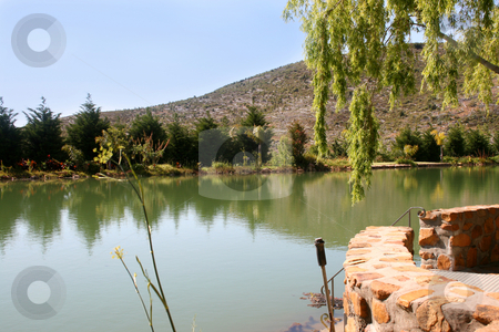 Dam at olive farm stock photo, Dam at olive farm next to the patio by Vanessa Van Rensburg