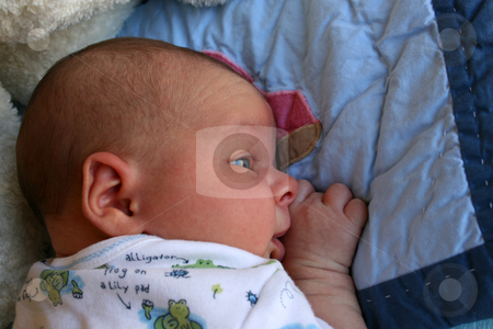 Baby on Tummy stock photo, Week old baby boy on a blue blanket early in the morning by Vanessa Van Rensburg