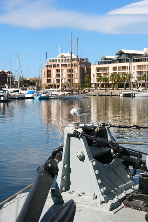 Seagull stock photo, Seagull on boat in a Cape Town Harbor, South Africa by Vanessa Van Rensburg