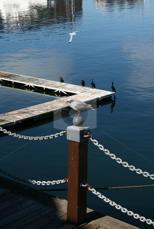 Seagull stock photo, Seagull sitting on a wooden pole in the harbor by Vanessa Van Rensburg