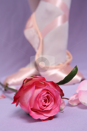 Ballet Shoe stock photo, Satin Ballet shoe with a pink rose.  FOCUS ON ROSE by Vanessa Van Rensburg