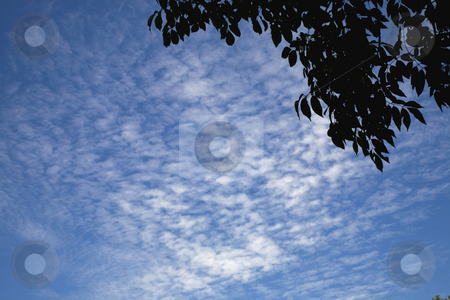 Leaves against blue sky stock photo, Clouds in Sky by David Chapman