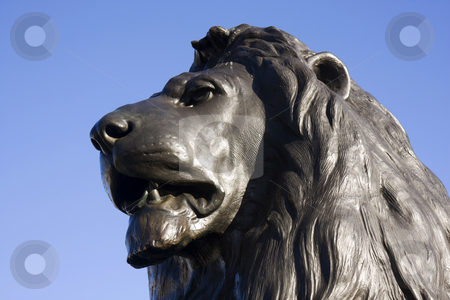 Trafalger Lion stock photo, Close up of a bronze lion head at Trafalger Square, London, England by Darren Pattterson