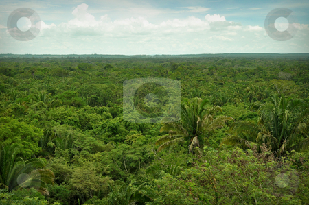 Rain Forest stock photo, Overhead View of the Rain Forest by Brandon Bourdages