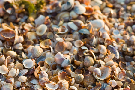 Sea-shell texture stock photo, Background series: sea shell texture on the beach by Gennady Kravetsky