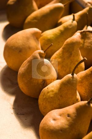 Pear stock photo, Fruit series: freshly grown pears background by Gennady Kravetsky