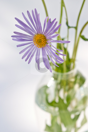 Camomile stock photo, Flower series: camomile bouquet in the spring by Gennady Kravetsky