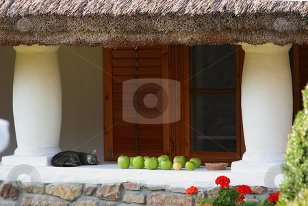 Still-life stock photo, A charming cat is sleeping on the yard by ARPAD RADOCZY
