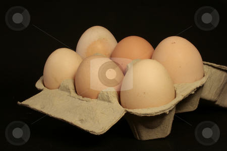 Eggs stock photo, A carton of eggs on black background by Marina Magri