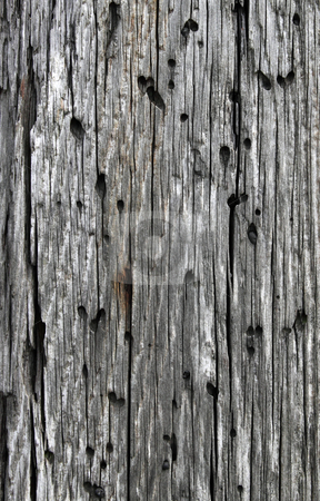 Old weathered wood with holes, natural texture background. stock photo, Old weathered wood with holes, natural texture background. by Stephen Rees