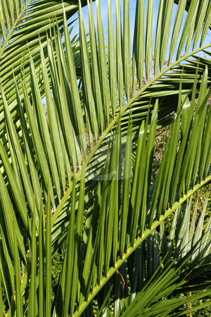 Spiky green leaves in a tropical garden. stock photo, Spiky green leaves in a tropical garden. by Stephen Rees