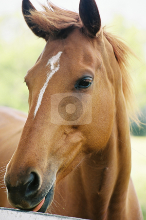 Thoroughbred stock photo, Young horse(film) by Leah-Anne Thompson
