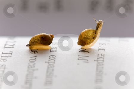 Small snails stock photo, Two small snails moving over book chapter by Tito Wong