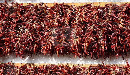 Hungarian paprika stock photo, The tasty Hungarian paprika they are drying in garland by ARPAD RADOCZY