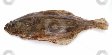 Flounder fish stock photo, Fish flounder on white background by Nataliya Taratunina