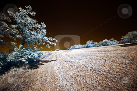 ... an infrared lanscape stock photo, ... an August infrared vision by emiliano beltrani