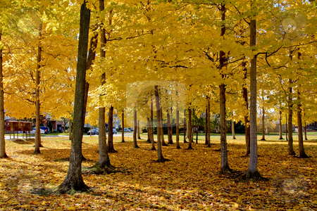Parc in Fall stock photo, Park Budge in fall, Montreal by Artur Staszewski