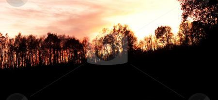 Panoramic sunset stock photo, 19 megapixels panoramic view of the sun setting behind a forest tree by Laurent Dambies