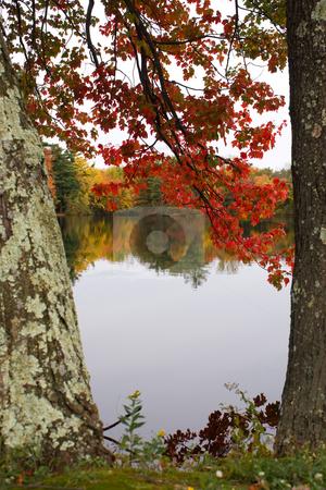 Fall Foliage stock photo, A gorgeous autumn scene with a lake and trees showing the bright colors of fall in New England. by Todd Arena