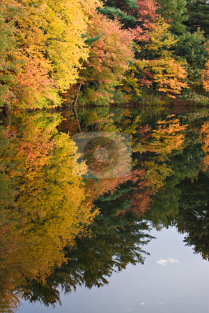 Connecticut Autumn Foliage stock photo, A gorgeous autumn scene with a lake and trees showing the bright colors of fall in New England. by Todd Arena
