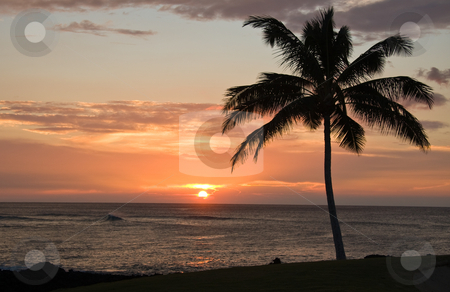 Single Palm tree framing a Hawaiian Sunset stock photo, Single Palm tree framing a Hawaiian Sunset by Steven Heap