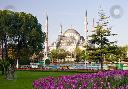 Blue Mosque 2 stock photo, Blue Mosque in Istanbul with tulips in the foreground by Steven Heap