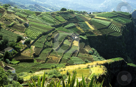 Terraced Fields stock photo, Cultivated terraced fields on the cliff top on the island of Madeira by Steven Heap