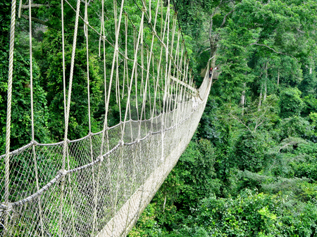 Walkway in rain forest stock photo, Rope walkway through the treetops in a rain forest in Ghana by Steven Heap
