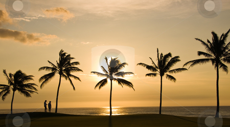 Couple and Hawaii Sunset stock photo, Couple overlooking the sunset reflecting on the sea with palm trees in the foreground by Steven Heap