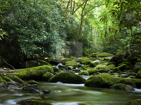 Peaceful river flowing over rocks stock photo, Forest river flowing gently over moss covered rocks by Steven Heap