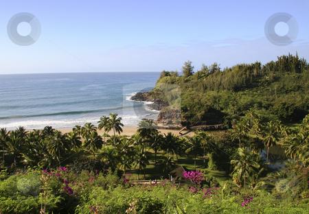 Tropical seaside garden stock photo, Seaside garden with sandy beach in Hawaii by Steven Heap