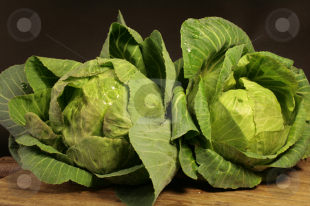 Cabbage stock photo, Close up of two cabbages on black background by Marina Magri
