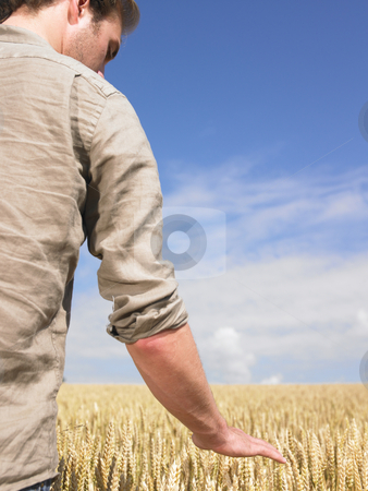 Man in wheat field stock photo, Man standing in wheat field touching crop by Mog Ddl