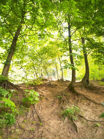 Wooded Hillside stock photo, Wooded hillside backlit by the sun. Vertically framed shot. by Mog Ddl